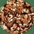 Walnut Halves & Pieces - Raw