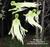 Ghostly Spirits Wood Pattern