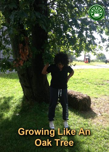 growing-like-an-oak-tree-greengreenscrub2.jpg