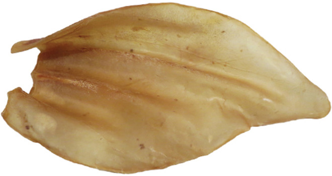 Smoked or White Cow Ear Shrink With UPC