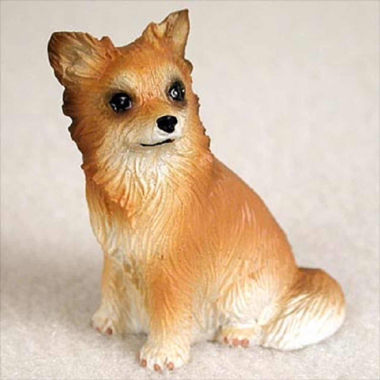 Chihuahua Longhaired