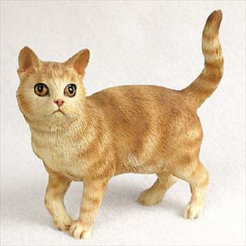 shorthaired red cat standing