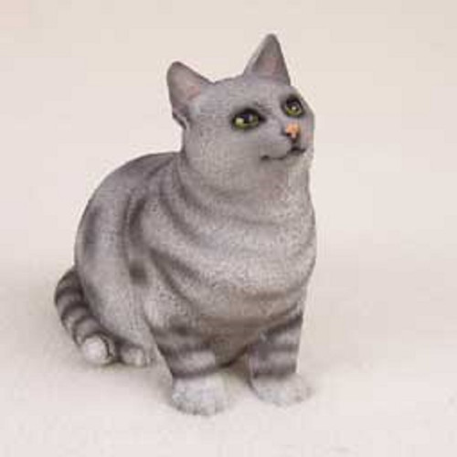shorthaired silver cat pregnant
