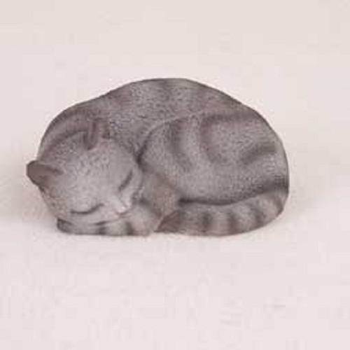 silver shorthaired cat sweet dreams