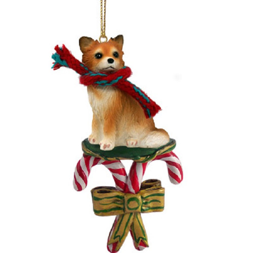 chihuahua longhaired candy cane