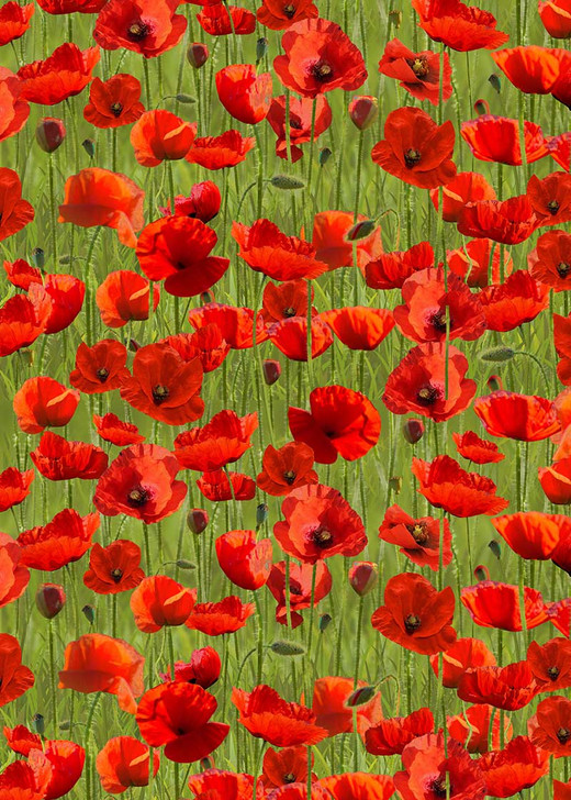 Anzac Day Remembering Day Red Poppies Green Background Cotton Quilting Fabric 1/2 YARD