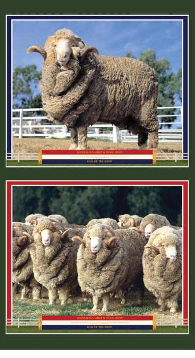 Merino Muster Merino Rams Australian Sheep Cotton Quilting Fabric Panel