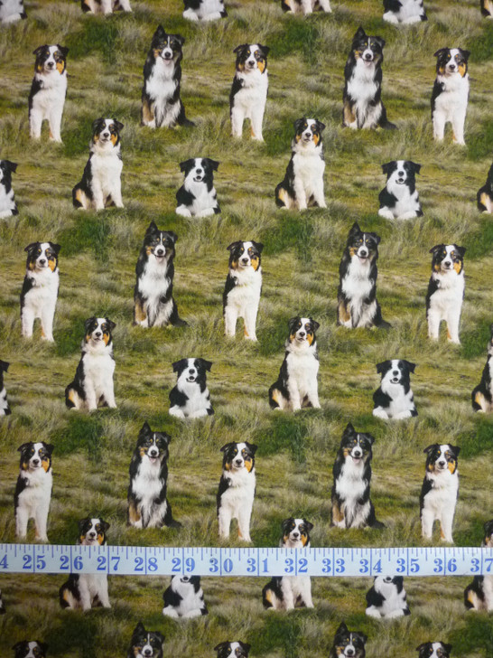 Merino Muster Sheep Dog Border Collie Grass Background Cotton Quilting Fabric