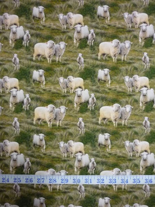 Merino Muster Merino Sheep Allover Grass Background Cotton Quilting Fabric