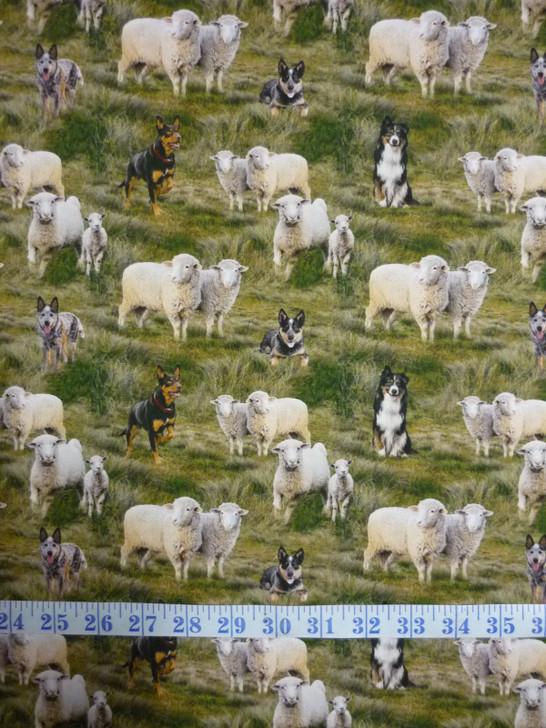 Merino Muster Dogs Herding Sheep Grass Background Cotton Quilting Fabric