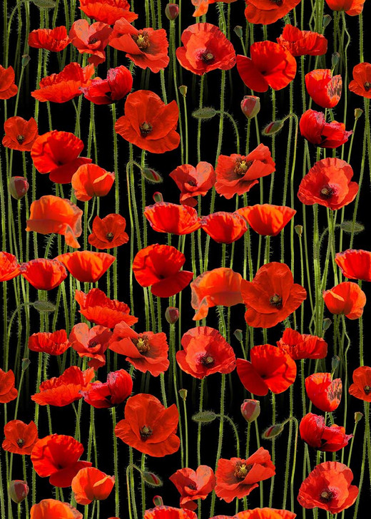 Anzac Day Remembering Day Red Poppies Black Blackground Cotton Quilting Fabric 1/2 YARD