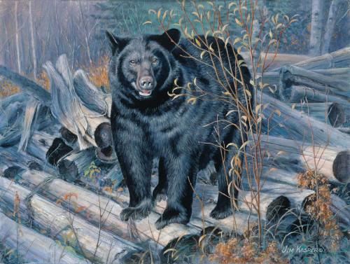 Ant Hunter Black Bear Original Acrylic Painting by Jim Kasper