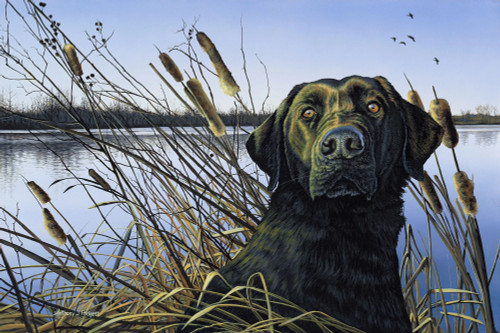 Anticipation Black Lab with Cattails Original Acrylic Painting by Anthony Padgett