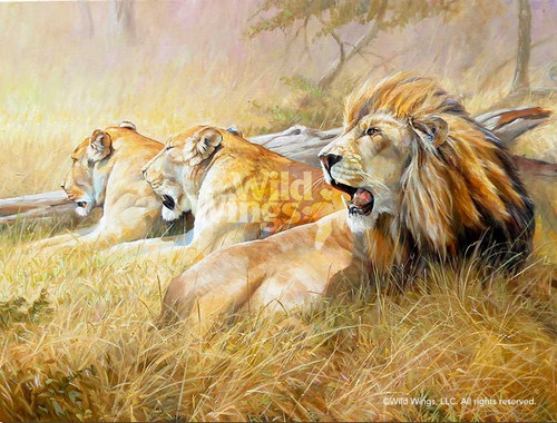 Sound of Africa, Lions Original Oil Painting by Grant Hacking