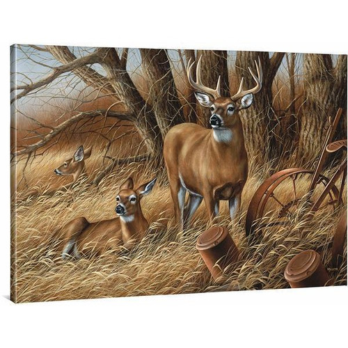 Rustic Retreat Whitetail Deer Gallery Wrapped Canvas by Rosemary Millette