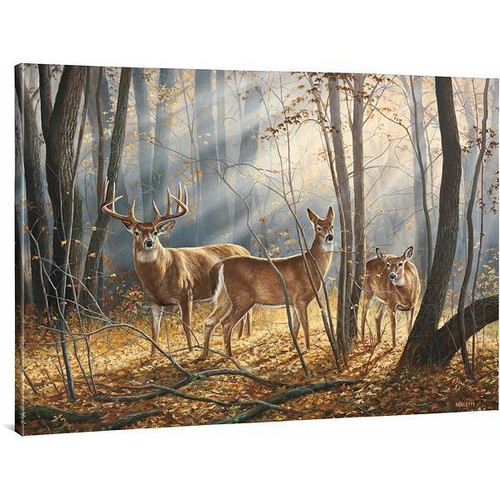 Woodland Splendor Whitetail Deer Gallery Wrapped Canvas by Rosemary Millette