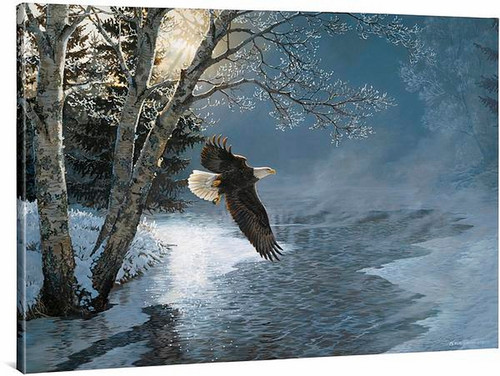 Awakening Bald Eagle Gallery Wrapped Canvas by Persis Clayton Weirs