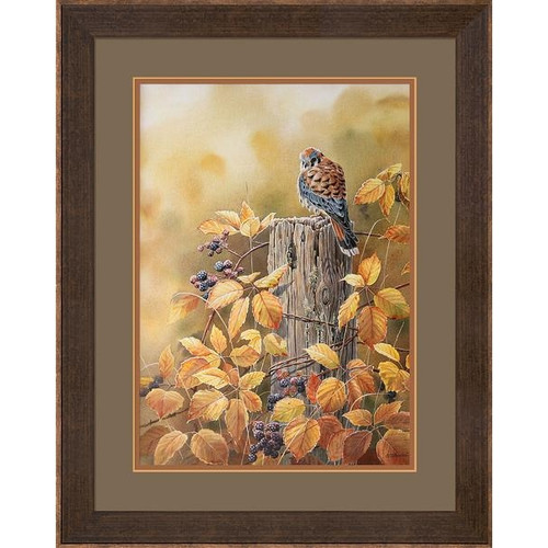 Autumn Mist Kestrel Limited Edition Framed Art Print by Susan Bourdet