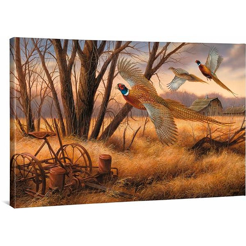 Prairie Wings - Pheasants Gallery Wrapped Canvas by Rosemary Millette
