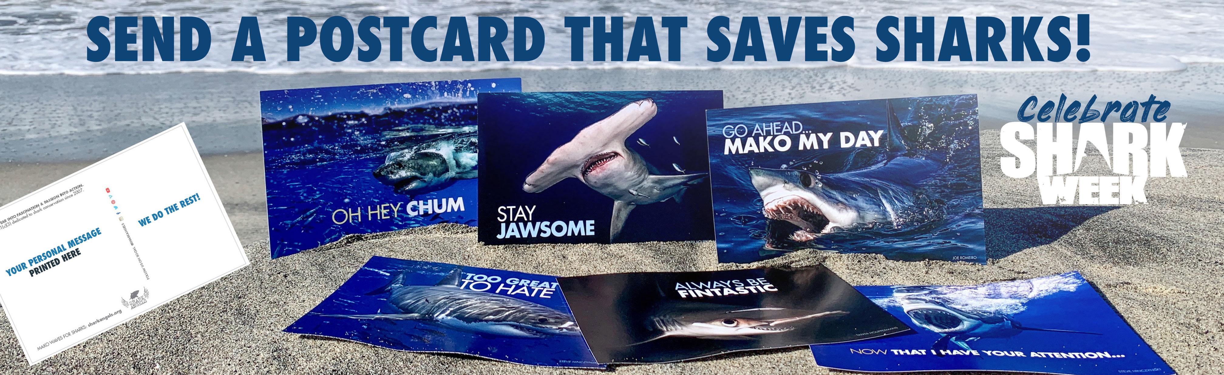 shark-week-postcard.jpg