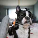 Paw Wave Rerk Pet Massager with Frenchie