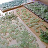 When we sort sea glass we begin by color and hue, then refine to size and shape.  It can take hundreds of hours of beach combing and matching to find 2 pieces of sea glass that are similar in size, shape, color, hue, thickness, tone and frost.