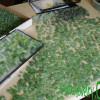 Green Beach Found Genuine Sea Glass Earrings on 24K Gold Vermeil Coral Branch Leverbacks