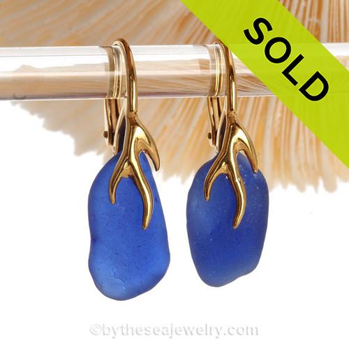 Beautiful Vivid Cobalt Blue Sea Glass Earrings on 24K Gold Vermeil Coral Branch Earrings