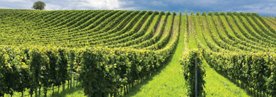 The Use of Flail Mowers for Orchard and Vineyard Maintenance