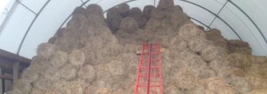 Livestock Winter Hay Needs – Hay Calculator