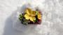 Vintage Spring Dogwood Bracelet Enamel Flowers Yellow Green, Wide Maroon Plastic Cuff  Ellen Originals