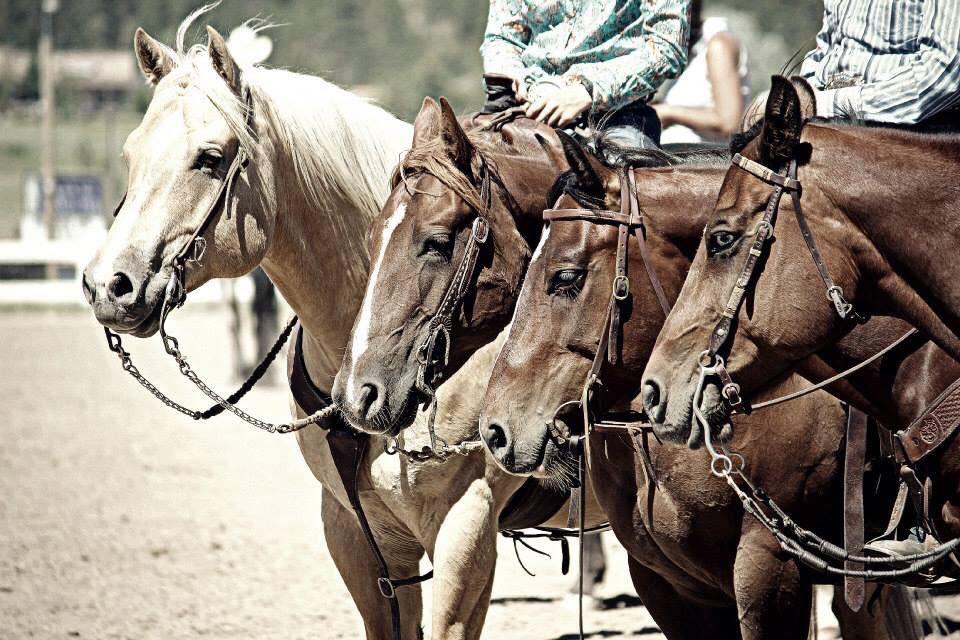 horseline.jpg