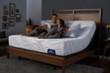 Serta Perfect Sleeper Sandtimer Plush Mattress 5