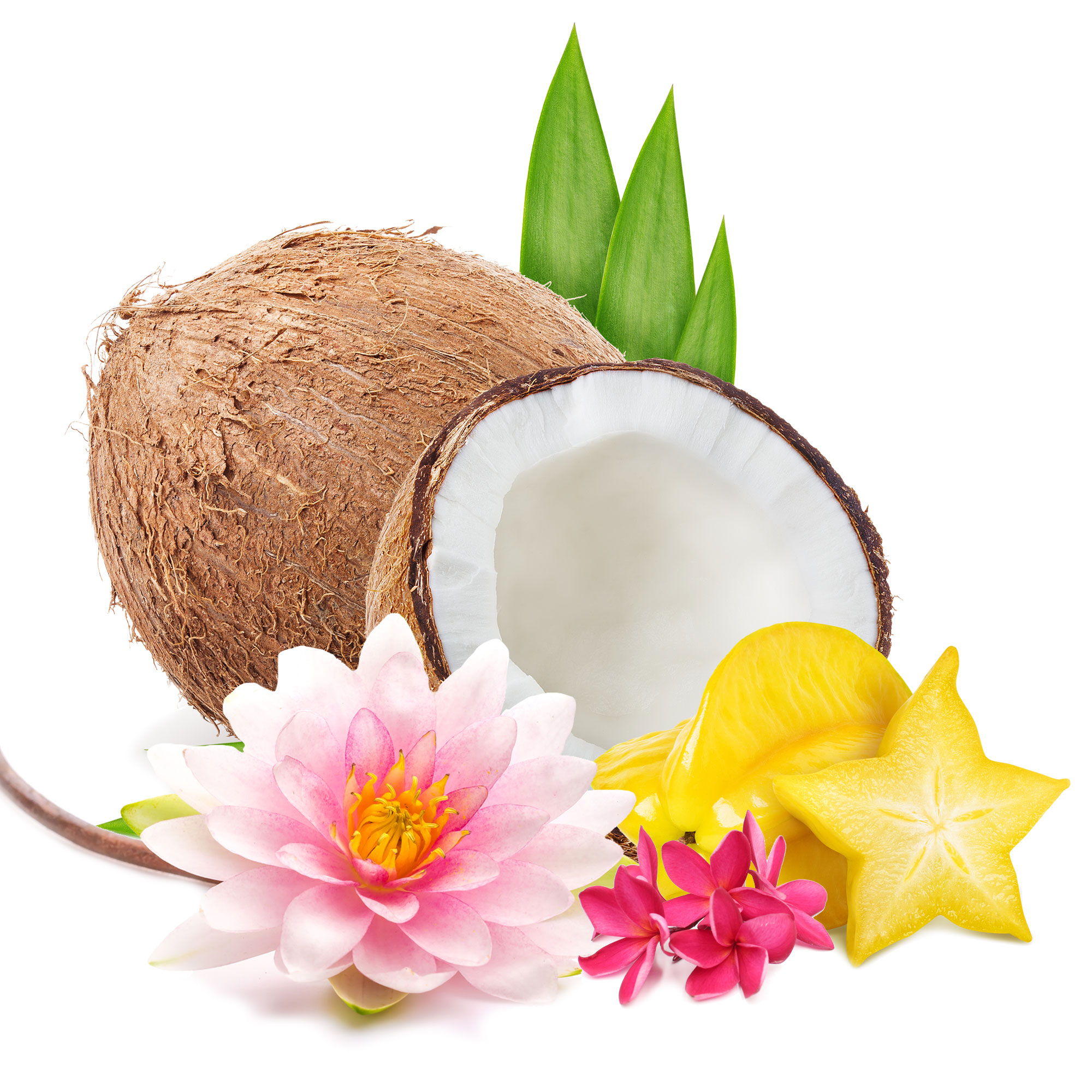 Pure Paradise Scent Ingredients