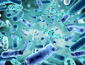 Good Gut Health 101: Why You Need Probiotics and How to Get Them