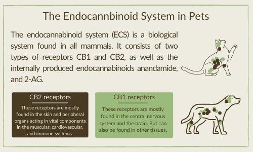 CBD for pets endocannabinoid system