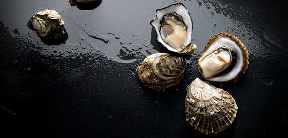 Coffin Bay Live Pacific Oysters Bistro Med Plate 1 Dozen