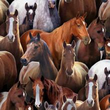 Black Horses - Animals - Elizabeth's Studio Cotton