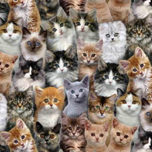 Multi Packed Cats - Adorable Pets - Elizabeth's Studio Cotton - 1/2 yard (3802E-MLT)