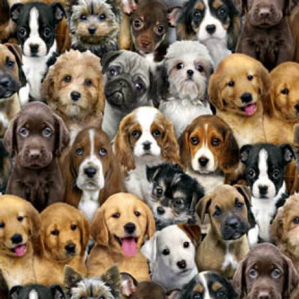 Multi Packed Dogs