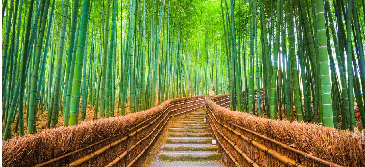 kyoto-japan-bamboo-forest-2-1280.jpg