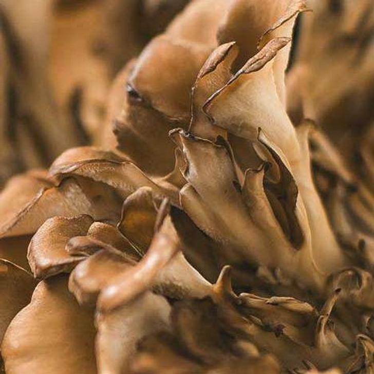 Fresh Maitake Frondosa Mushrooms