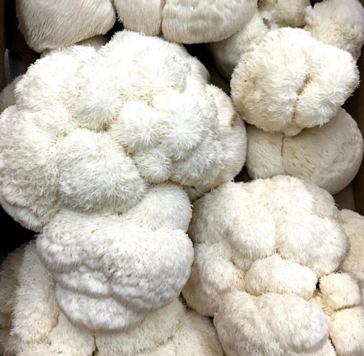 Fresh Lion's Mane Mushrooms
