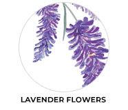 Lavender Wedding Theme Favours