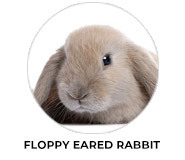 Floppy Eared Rabbit Personalised Easter Chocolates