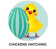 Chickens Hatching Personalised Easter Chocolates