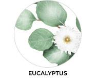 Eucalyptus Theme Wedding Favours