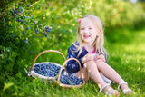 Would you like to pick Blueberries with a bear? Read about  a mom and child who did!