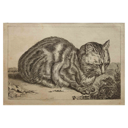 """The Large Cat"", engraving on paper   Francois Vivares after Cornelis Visscher"