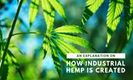An Explanation on How Industrial Hemp is Created